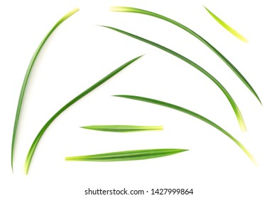 fresh pandan leaves isolated on white background, top view