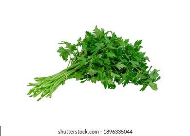Fresh parsley bunch isolated on white background.