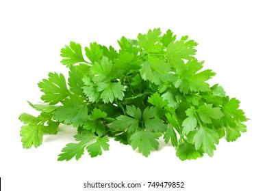 Fresh parsley bunch  isolated on white background