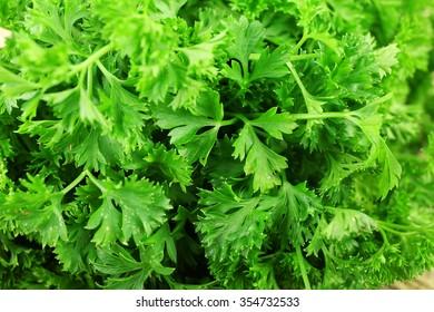 Fresh parsley closeup
