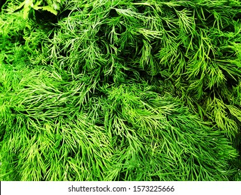 fresh parsley and dill on the counter