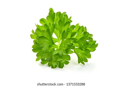 Fresh Parsley herb, healthy food, close-up, isolated on white background.