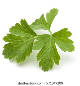 Fresh parsley herb leaves  isolated on white background.