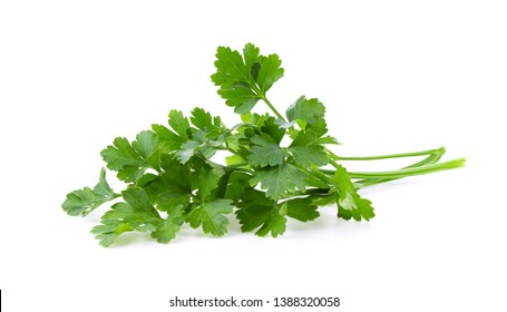 fresh parsley isolated on white background. full depth of field