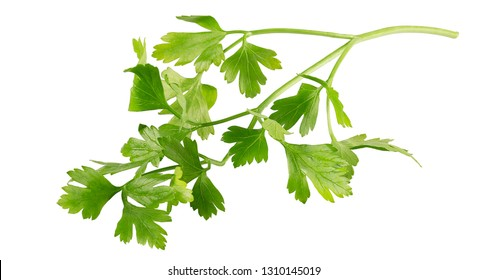 Fresh parsley leaves isolated on white background with clipping path as package design element and advertising. Full depth of field.