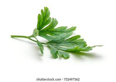 Fresh parsley leaves isolated on white background closeup