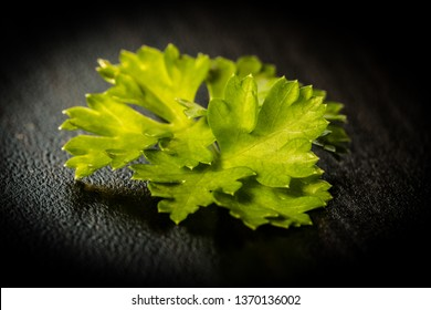 Fresh parsley on black background. Very tasty and popular herb in every kitchen. Detail of one of its leaf. Pure and simple.