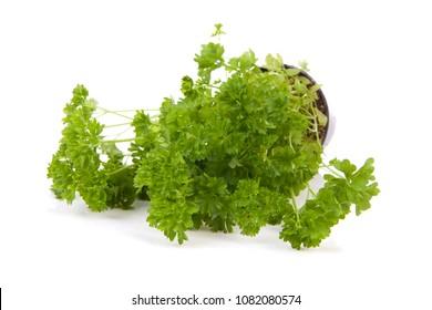 Fresh parsley plant over white background