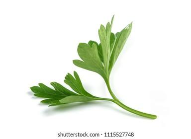 Fresh parsley sprigs isolated on white background