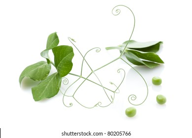 Fresh pea with green leaves