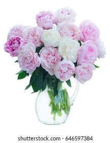 Fresh peony flowers colored in shades of pink in vase isolated on white background