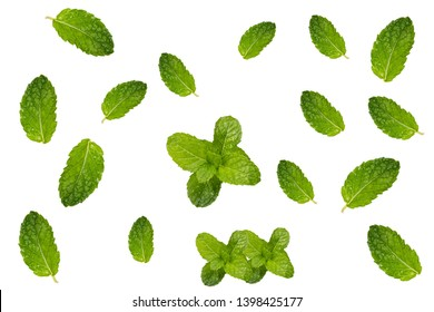 Fresh peooermint leaves collection isolated on white background