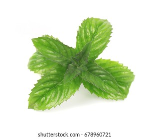 Fresh peppermint isolated on white background. Mint leaves on a white background.