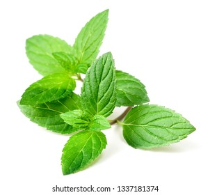 fresh peppermint leaves isolated on white background