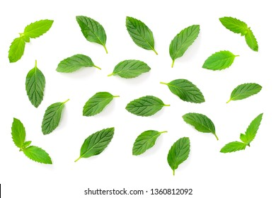 fresh peppermint leaves isolated on white background, top view