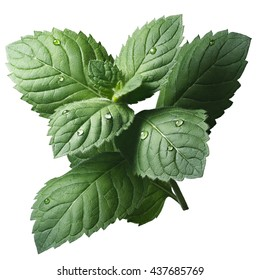 Fresh peppermint leaves (Mentha Piperita). Clipping path, infinite depth of field, enhanced color