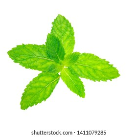 Fresh peppermint leaves on white background with clipping path.