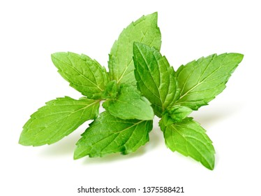 fresh peppermint twig isolated on white background