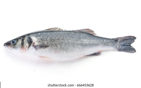 Fresh perch fish isolated on white background. Ready for cooking.