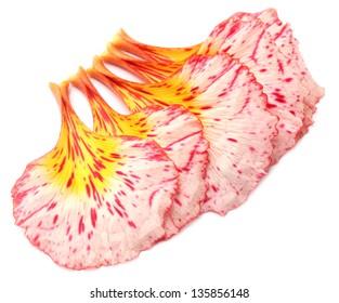 Fresh petals of Delonix regia or Krishnachura