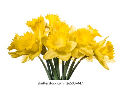Fresh picked Daffodil flowers in a bouquet
