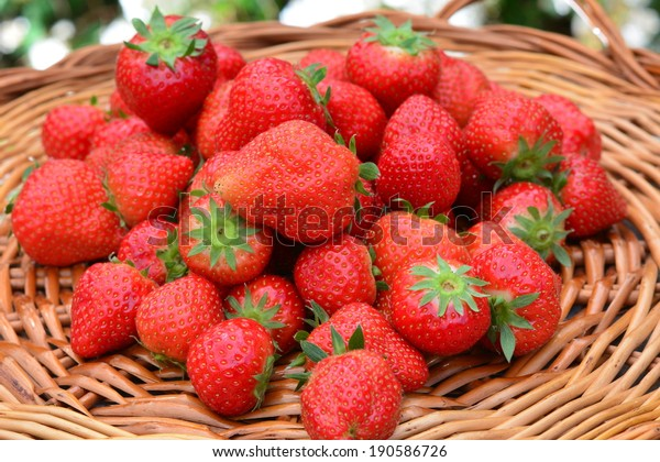 Fresh picked red strawberries