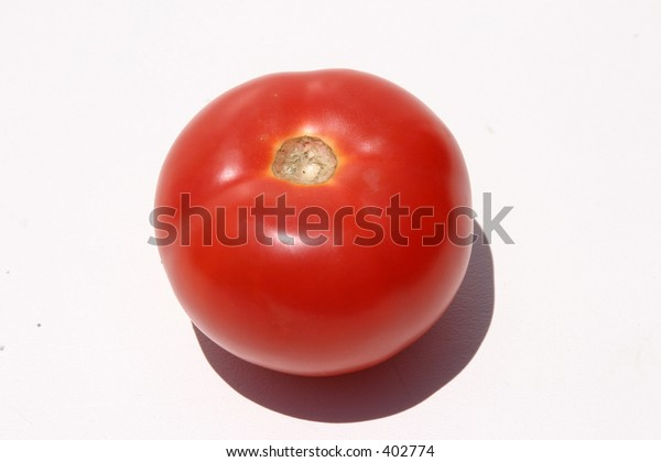 fresh picked tomato