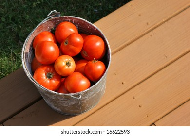 Fresh Picked Tomatoes in Bucket