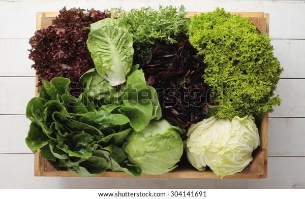 fresh picked whole lettuce varieties