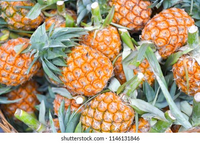 Fresh pineapple (Ananas comosus) in market at Khlong Lat Mayom floating market, Bangkok, Thailand.