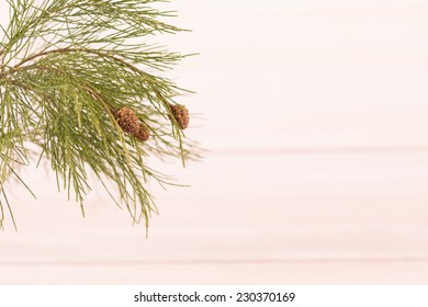 Fresh pinecones with paulownia wooden background