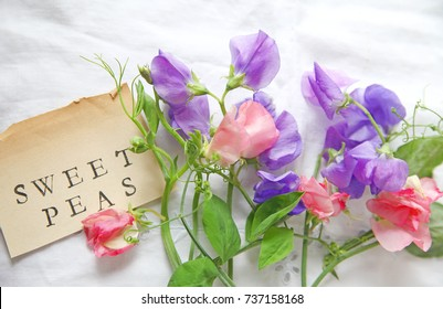 Fresh pink and lavender-colored sweet peas on white eyelet fabric with the words 'sweet peas' on a vintage  book page