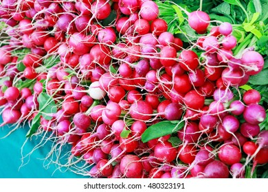 Fresh pink radishes from the garden