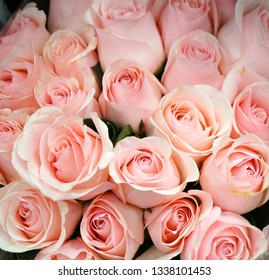 Fresh pink roses bouquet flower background