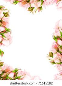 Fresh pink roses frame border isolated on white background