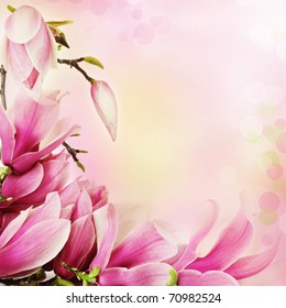 Fresh, pink, spring magnolia tree blossoms. Border frame on pink background.
