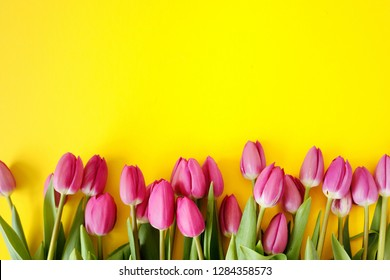 Fresh Pink tulips. A bouquet of spring flowers on a yellow background Beautiful greeting card. Spring Holidays concept. Copy space. Banner