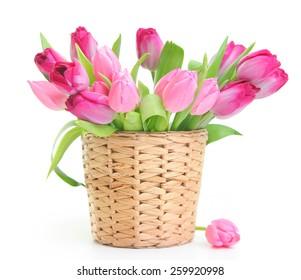fresh pink tulips on white background