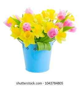 fresh pink tulips and yellow daffodils in pot isolated on white background
