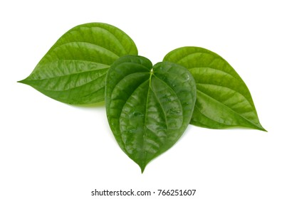 Fresh Piper betel leaf on white background