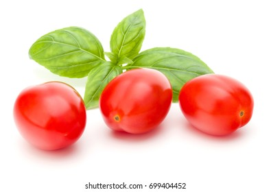 fresh plum tomato with basil leaf isolated on white background