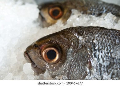 fresh pomfret fish Brama brama on ice in the restaurant
