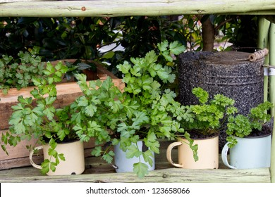 Fresh potted herb plants growing in a rustic pot garden.