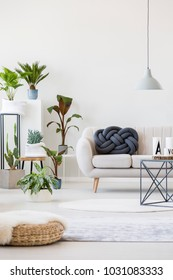 Fresh potted plants in bright living room interior with knot pillow on the sofa