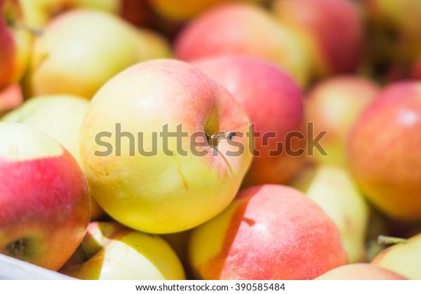 Fresh pretty shiny red and yellow apples closeup