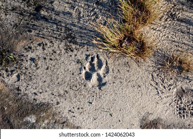 A fresh print from a bear is seen on the trail in Red River Gorg