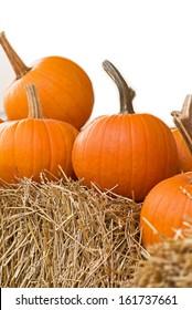 Fresh pumpkins lined along a pumpkin patch.
