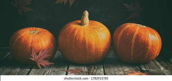 Fresh pumpkins in a row on a wooden dark vintage table, banner. Rustic style. Thanksgiving and halloween holiday concept. Toned image. Selective focus