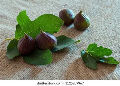 fresh purple figs on burlap and fig tree leaves