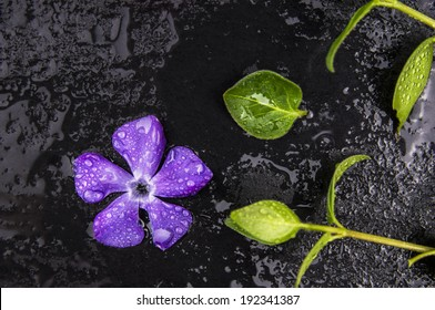 Fresh purple flower and green leaves with drops of water on black table,spa